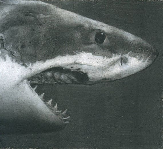 Great White Shark Drawing Etsy