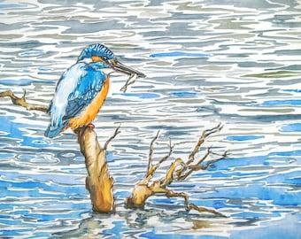 Kingfisher art, wildlife watercolour painting, original bird art, The Catch