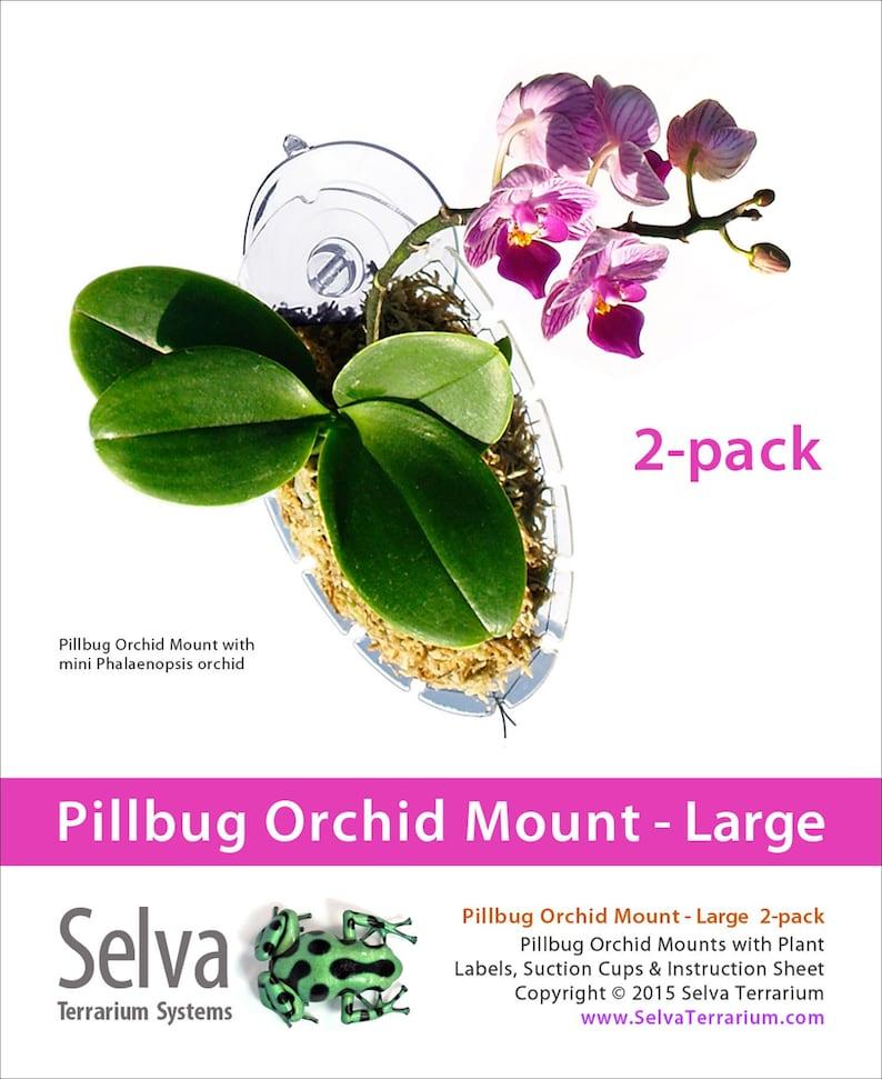 Pillbug Orchidee Mount Grosse 2 Pack Etsy
