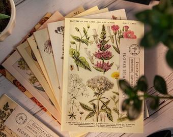 Botany Material Books 30 Pages - Vintage Style Botanical Paper Prints for Art Journaling, Junk Journals, Notebooks, Ephemera, Kraft