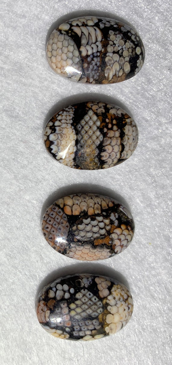 For PANKAJ - Four Composite Snakeskin Stone Cabochons - Fossilized Palate of Ancient Wrasse Fish