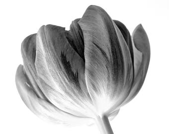 Tulip Print, Flower Art, Black and White Photography, Country Garden Art, Floral Decor, 8 x 10 inches, Unframed