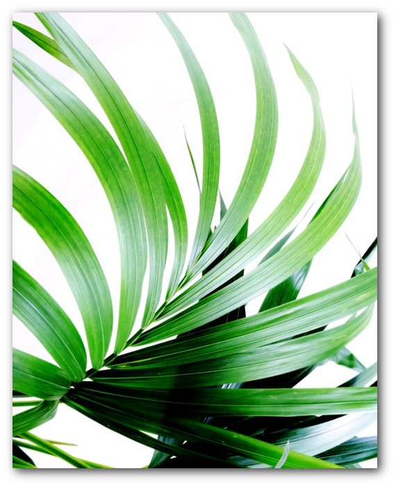 Impresión de hoja de Palma hoja Tropical abstracto arte de | Etsy