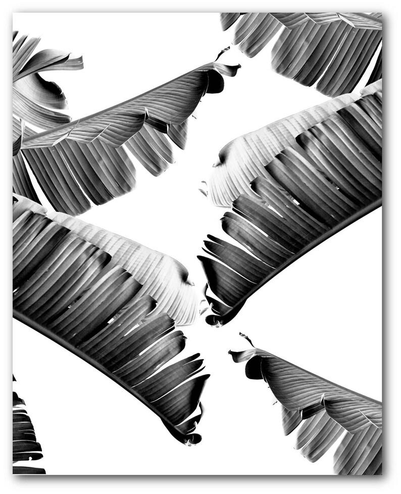 Unframed Banana Leaf Print 8 x 10 Inches Black and White Tropical ...