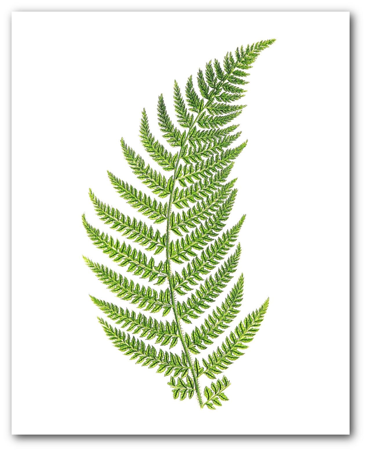 Farn drucken grün Farn botanischen Farn Kunst botanische