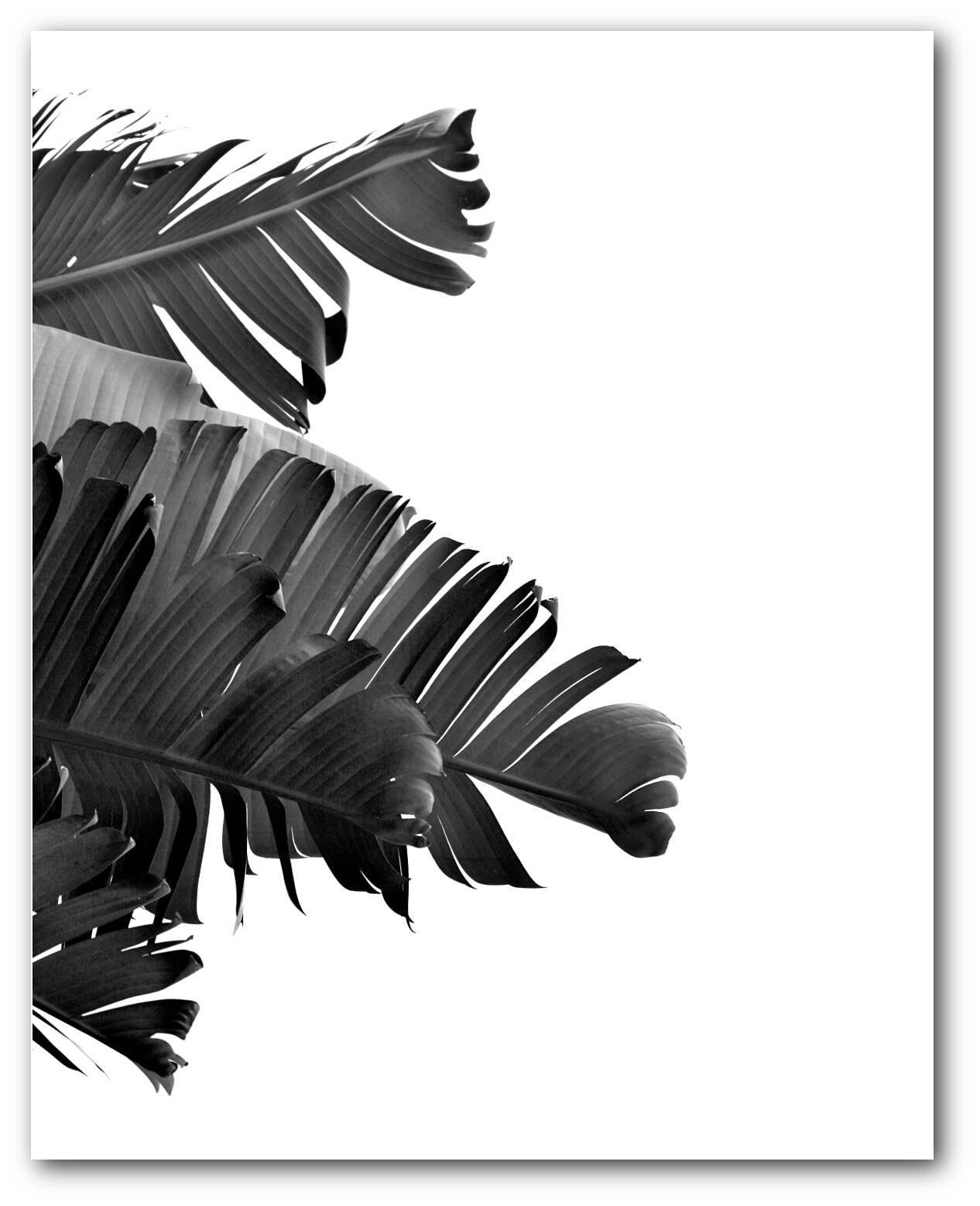 Black and White Banana Leaf Print Tropical Leaf Tropical Theme Decor Tropical Banana Leaves Summer Art 8 x 10 inches Unframed