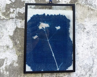 cyanotype framed