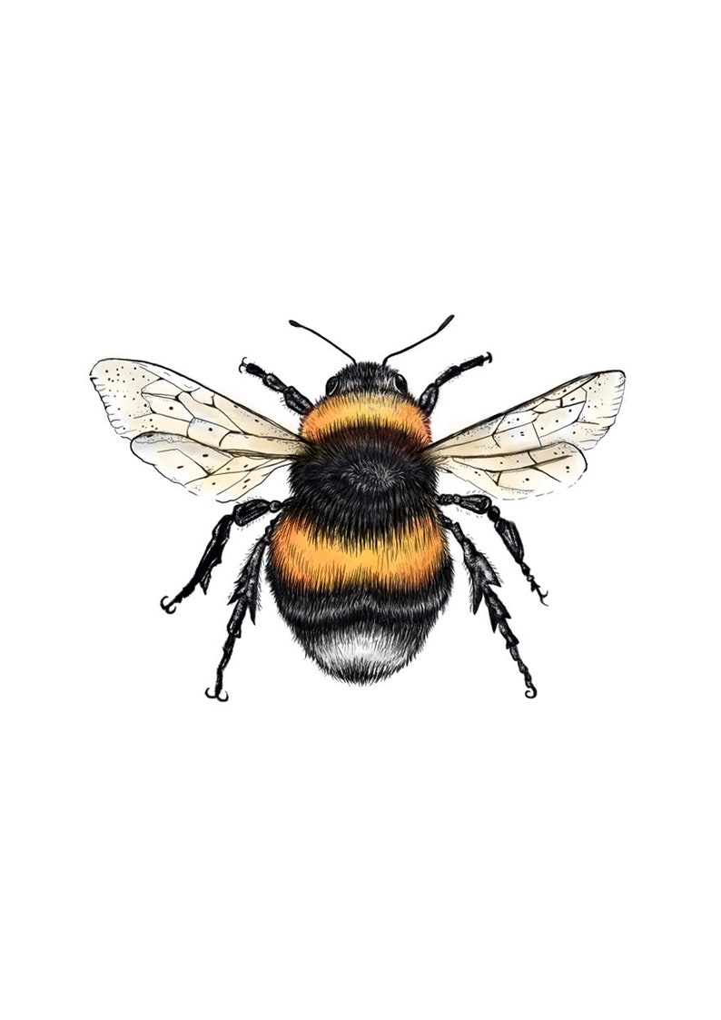 wildlife art gifts for her bee science illustration animal drawing Bumble Bee Print Artwork Painting animal print