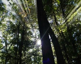 Tree Sunbeam Photo, Sunshine Photo, Sun Ray, Tree Photo, Sunshine Print, Sun Ray, Sun Art, Glow, Morning Sun, Sun Beam Through the Trees
