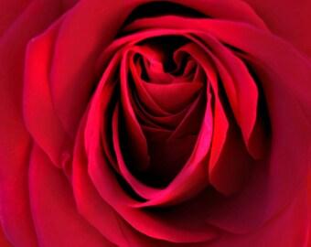 Photo Du Jour De La Saint Valentin Rose Rouge Amour Citation Etsy