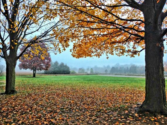 Michigan Fall Trees Falling Leaves Orange Fall Leaves Fall Etsy