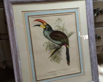 Vintage exotic bird print