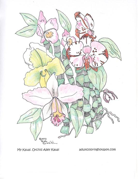 Erwachsenen Malvorlagen Orchideen Orchidee Gasse Kauai   Etsy
