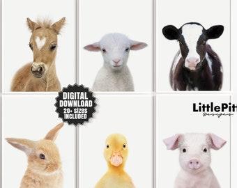 Farm animal nursery decor, farm nursery prints, foal, lamb, calf, bunny, duck, piglet, set of 6 prints, nursery baby animals, digital prints