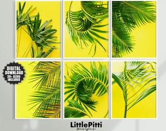 Little Pitti