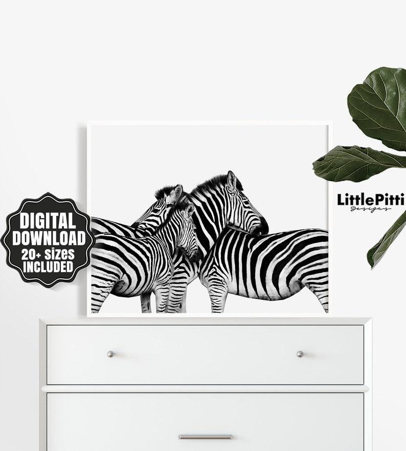 Zebra Zebra print black and white zebra art animal print image 0