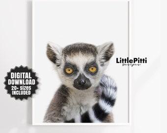Lemur print, jungle print, baby room print, lemur photo, printable nursery, jungle animal, lemur wall art, large printable, digital print