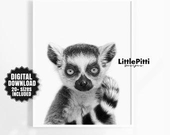 Lemur, black white animal print, modern nursery wall art, lemur printable, jungle nursery, african art, lemur print, grey printable art