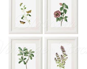 Green Plant Print Set of 4 Vintage Purple Botanical Art Decor, Printable Art Set Of Four Prints, INSTANT DOWNLOAD - 2371