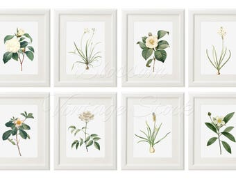 Floral wall art print black and white print printable art etsy floral wall art botanical printable set white flower print botanical prints set of 8 wall art instant download digital illustrations 2525 mightylinksfo
