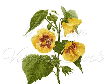 Antique Illustration - Botanical Yellow Flower Clipart Digital Image for Printing, Artwork, Collage INSTANT DOWNLOAD - 2012
