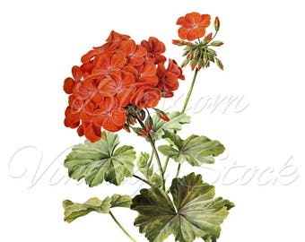 Red flowers print. Wall Decor Botanical Print Red flower print Flower  Wall Art, Flower print INSTANT DOWNLOAD - 2485