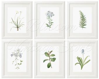 Light Blue Botanical Print Set, Large Prints, Botanical Print, Art Print - Antique Botanical Prints - Leaves, Flowers - Wall Art -2420