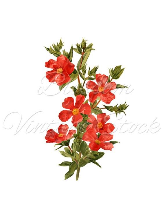 Clip Art Flores Vintage Flor Imagen Digital De La Imagen Etsy