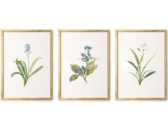 Botanical Print Set Botanical Wall Art Prints Blue flowers, printable art, Botanical decor INSTANT DOWNLOAD Vintage Illustrations - 2563