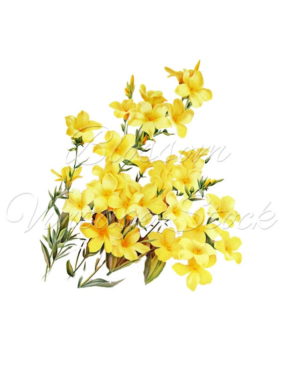 Botanical Flower Clipart Png Yellow Flowers Digital Image Etsy