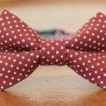Lovely Dots Cat Bow Tie Collar – Wine Red (Burgundy)