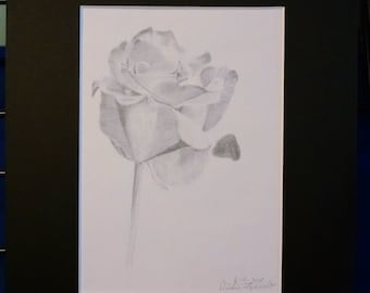 Single Rose print 5x7 matted to 8x10