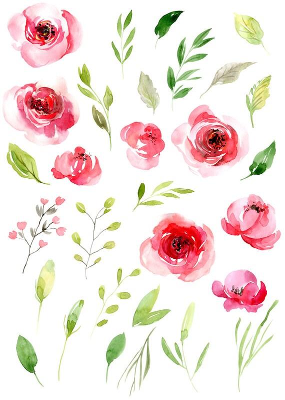 Aquarell Blumen Clipart rosa Blush Rotlicht Blumen Rosen | Etsy