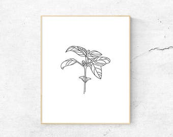 Printable Basil Drawing - Downloadable Basil Print
