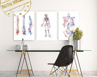 Anatomy Print Set, Medical Art Print, Anatomy Art Print, Printable Art,  Doctor Gift, Art Print Set, Doctor Office Wall Decor Printable
