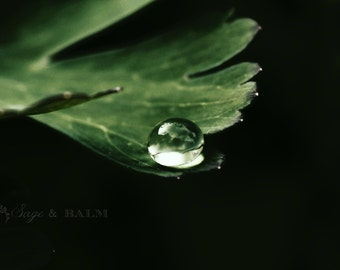 Water drop and green leaf macro/abstract nature photography, rain drop on a leaf, surreal, abstract photography, dark, minimalist print