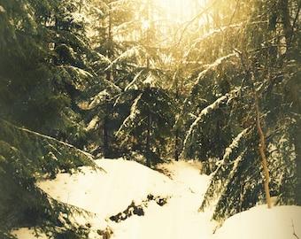 Dreamy winter landscape print, winter scene, snow, woodland print, snowy woodland, nature photography, romantic print, romantic winter print