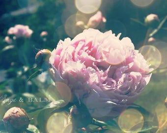 Dreamy pink peony fine art photography print, pink floral print, bokeh, romantic, nursery art, bedroom, gift ideas, mother's day, wedding