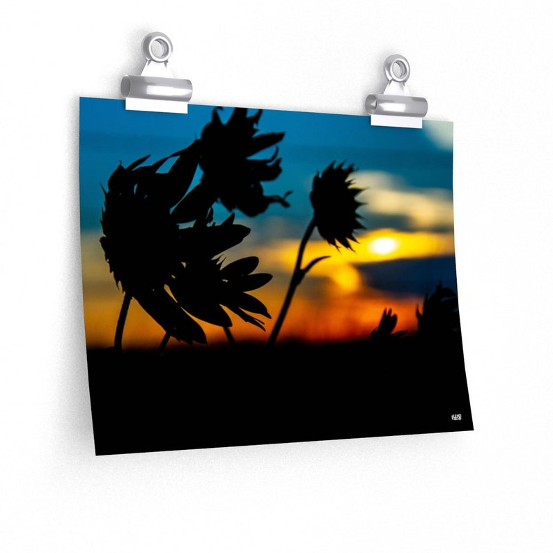 Sunflowers And Kansas Sunset Poster Print image 0