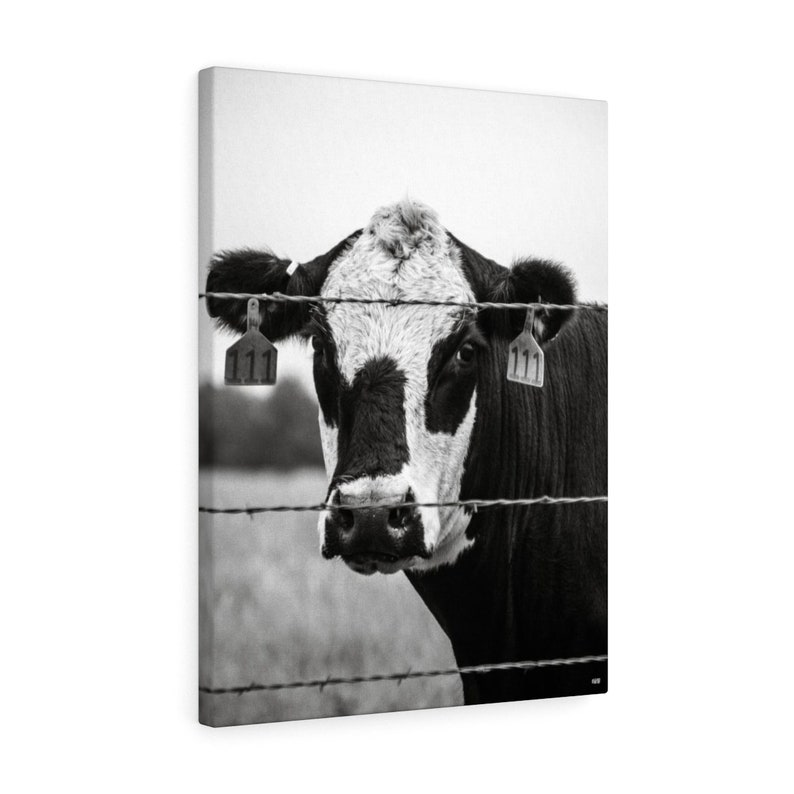 Cow Looking Through Barbed Wire Fence Canvas Wall Art image 0