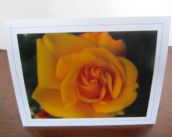 Photo Greeting Card | Handmade Card | Photo Note Card | Original Photography | Yellow Rose