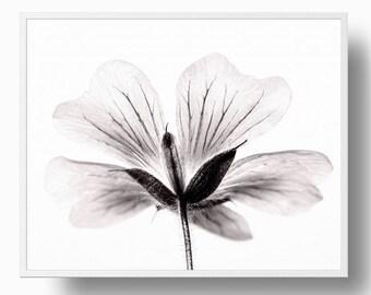 Cranesbill Flower Print, Black and white Flower Print, Botanical flower print, flower wall art, botanical print, minimalistic flower print