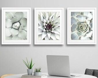 Succulent Cactus Prints Set, Cactus Print Set,Cacti Print, green leaves, Botanical Art, Cactus Print, Cactus Photo, Succulent Print