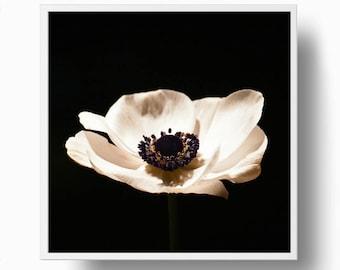 Anemone Sepia Print, Flower Print, Flower poster, Anemone Closeup, Flower Printable Plant Photograph, Anemone Printable Download Image