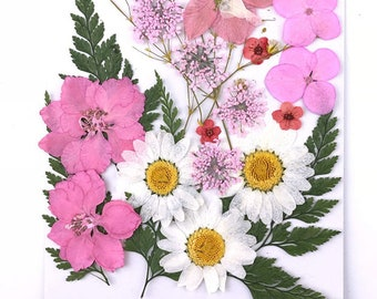 Vivid Pink - Cheap Global Shipping! Over 20 pieces Mix pressed flowers mixed pack dried dye flowers