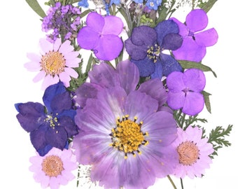 Vivid Purple - Over 20 pieces Mix pressed flowers mixed pack dried dye flowers
