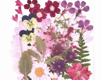 Red Purple Shade - Cheap Global Shipping! Over 20 pieces Mix pressed flowers mixed pack dried dye flowers