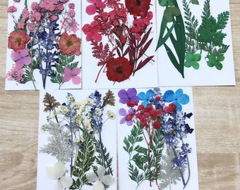 Variety Mix -  Cheap Global Shipping! - Mix pressed flowers mixed pack dried dye flowers