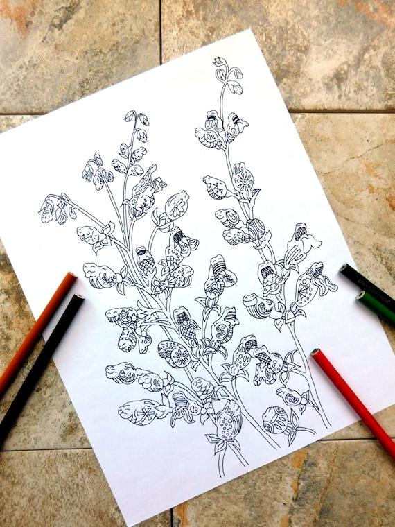 Blumen Färbung Seiten Drachen Malvorlagen Garten Färbung Seite Malvorlagen Frühling Native Pflanzen Löwenmaul Blume