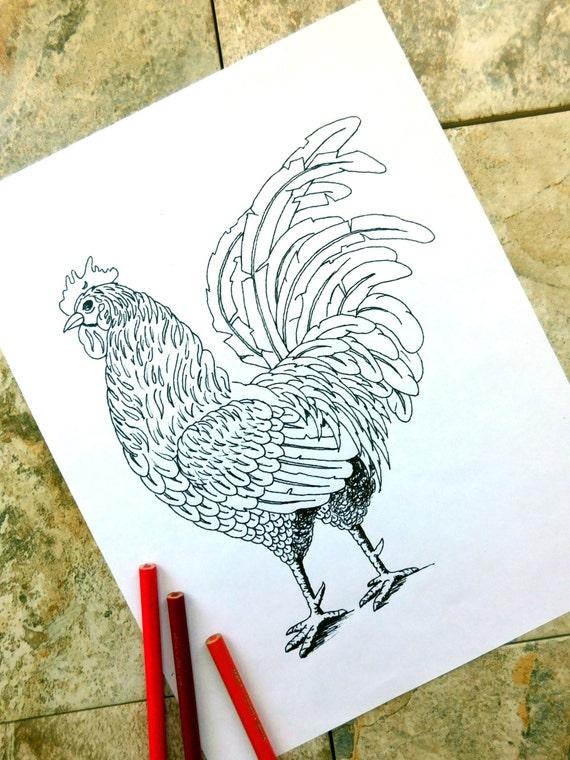 pollos colorear página para colorear gallina gallo pájaro | Etsy